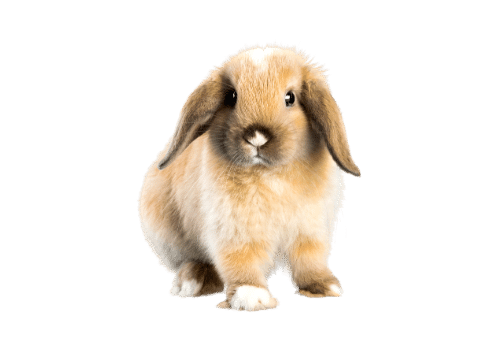 Food, treats and hay for small pets Rabbit
