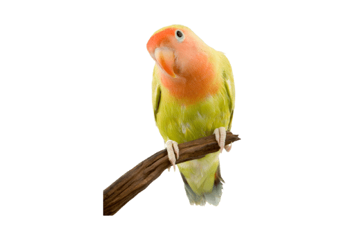 Food, treats and hay for small pets bird